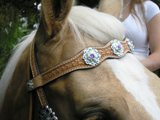 Big Bling Scalloped Browband Headstall