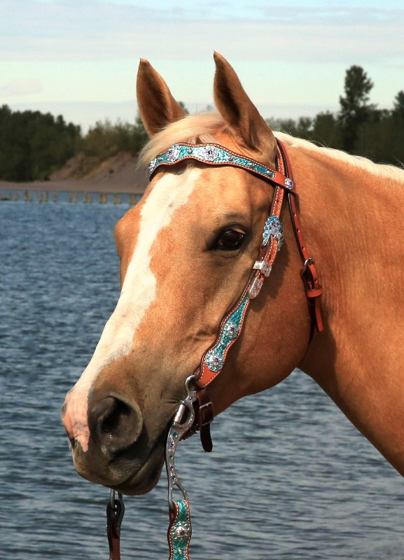 Mega Bling Scalloped Browband Headstall ~ A Jozee Girl Favorite!